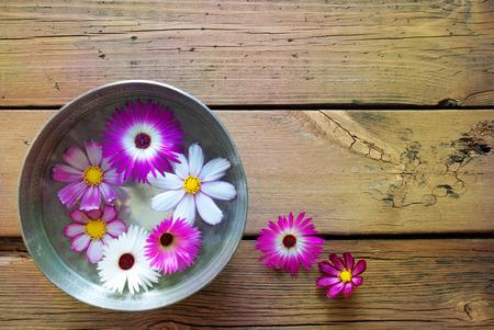 여기에 텍스트를 복사 공간 실버 그릇 또는 자주색 및 흰색 화창한 노란색 효과 함께 무료 텍스트 Cosmea 꽃 나무 배경에 빈티지 복고풍 또는 소박한 스타일
