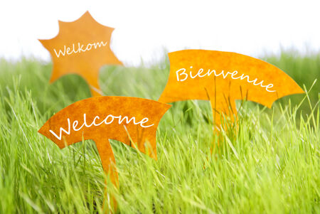 french text: Three Labels With Dutch Text Welkom And French Text Bienvenue Which Means Welcome On Sunny Green Grass For Spring Or Summer Feeling