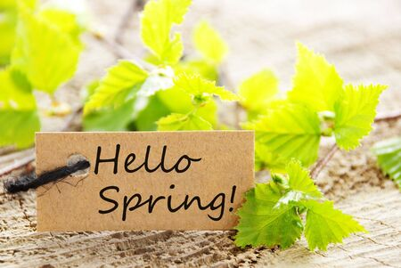 hello: Brown Label With Black Ribbon And English Text Hello Spring With Green Branches On Wooden Background