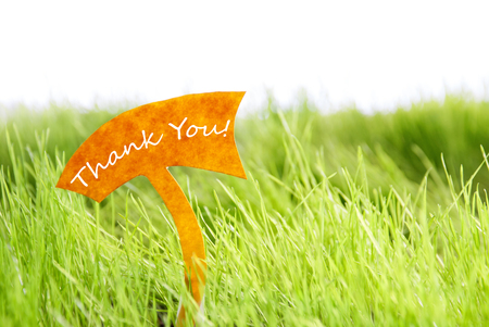 thankfulness: Label With English Text Thank You On Sunny Green Grass For Spring Or Summer Feeling