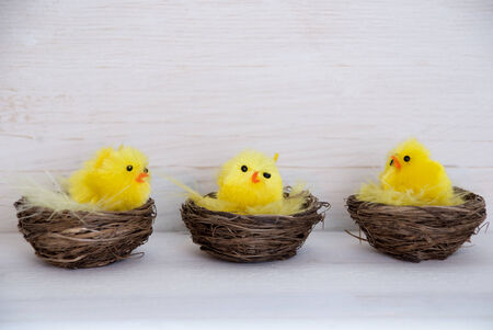 Three Sitting And Talking Easter Chicks In Easter Baskets Or Nest With Yellow Feathers On White Wooden Background With Copy Space Free Text Or Your Text Here For Advertisement Or Happy Easter Greetings Or Easter Decoration Stock Photo