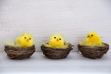 your text: Three Sitting And Quaking Easter Chicks In Easter Baskets Or Nest With Yellow Feathers On White Wooden Background With Copy Space Free Text Or Your Text Here For Advertisement Or Happy Easter Greetings Or Easter Decoration Stock Photo