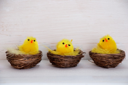 your text: Three Sitting Easter Chicks In Easter Baskets Or Nest With Yellow Feathers On White Wooden Background With Copy Space Free Text Or Your Text Here For Advertisement Or Happy Easter Greetings Or Easter Decoration