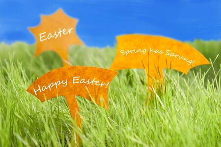 sprung: Three Labels With Englsih Text Easter Happy Easter And Spring Has Sprung On Sunny Green Grass For Spring Or Summer Feeling And Blue Sky And For Seasons Greetings Or Easter Greetings