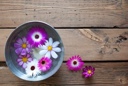 여기에 텍스트 복사 공간 실버 또는 보라색과 흰색 무료 텍스트 Cosmea 꽃 나무 배경에 빈티지 복고풍 또는 소박한 스타일