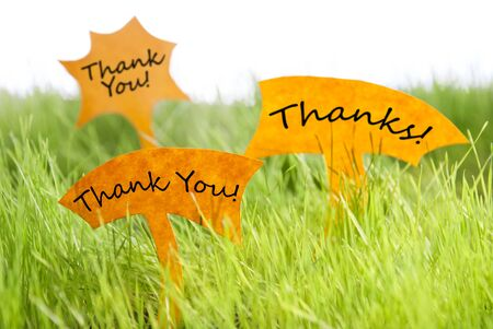thankfulness: Three Labels With English Text  Thank You And Thanks On Sunny Green Grass For Spring Or Summer Feeling Stock Photo