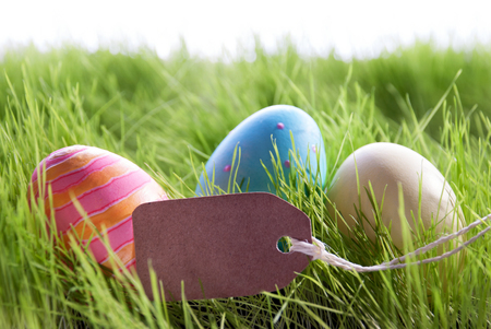 your text: Colorful Easter Background With Three Easter Eggs And Empty Label With Copy Space Or Free Text Or Your Text Here On Green Grass For Happy Easter Seasons Greetings