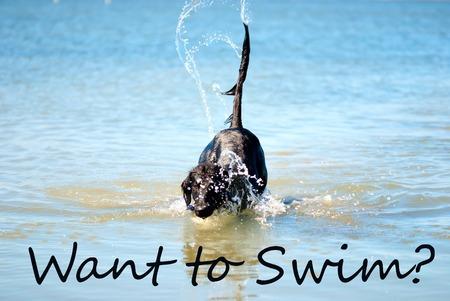 海 で 泳ぐ 英語