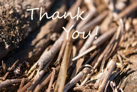 english text: Bamboo Or Wood As Background Or Backgrop Or Card. English Text Thank You For Thanksgiving. Close Up Or Macro View. Stock Photo