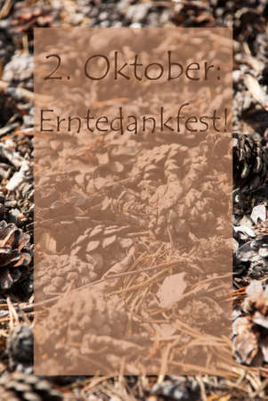 greeting season: Vertical Texture Of Fir Or Pine Cone. Autumn Season Greeting Card With Copy Space For Free Text. German Text Erntedankfest Means Thanksgiving