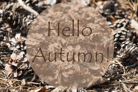 greeting season: Texture Of Fir Or Pine Cone. Autumn Season Greeting Card. English Text Hello Autumn