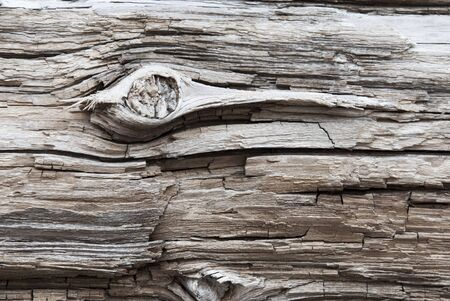 knothole: Rustic Brown Wooden Texture Or Background. White Texture in Vintage Or Retro Style. Copy Space For Advertisement Or Your Free Text Here. Wood With Knothole