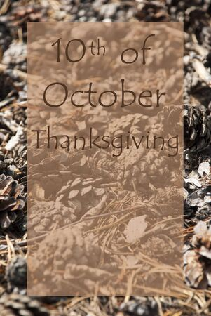 greeting season: Vertical Texture Of Fir Or Pine Cone. Autumn Season Greeting Card With Copy Space For Free Text. English Text 10th Of October Thanksgiving