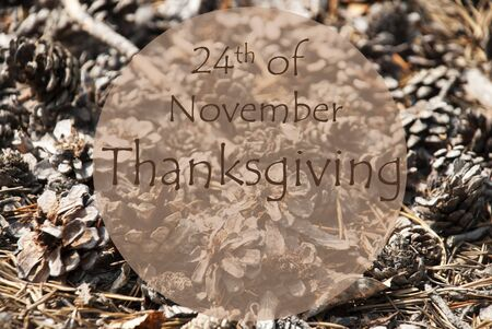 greeting season: Texture Of Fir Or Pine Cone. Autumn Season Greeting Card. English Text 24th Of November Thanksgiving