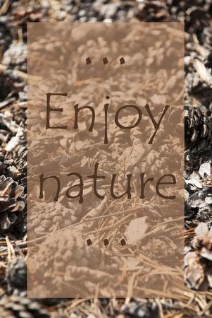 greeting season: Vertical Texture Of Fir Or Pine Cone. Autumn Season Greeting Card. English Quote Enjoy Nature Stock Photo