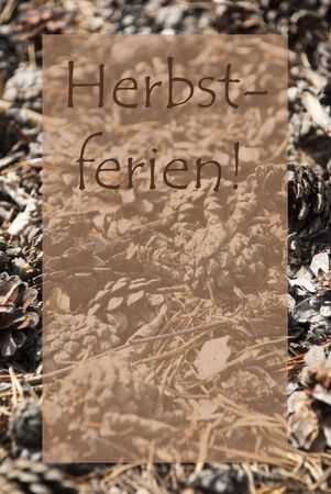 greeting season: Vertical Texture Of Fir Or Pine Cone. Autumn Season Greeting Card With Copy Space For Free Text. German Text Herbstferien Means Fall Break