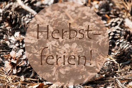 greeting season: Texture Of Fir Or Pine Cone. Autumn Season Greeting Card. German Text Herbstferien Means Fall Break Stock Photo