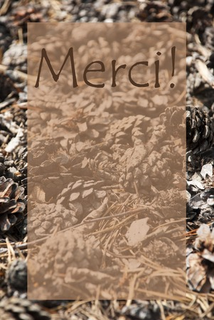 french text: Vertical Texture Of Fir Or Pine Cone. Autumn Season Greeting Card With Copy Space For Free Text. French Text Merci Means Thank You