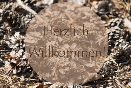 willkommen: Texture Of Fir Or Pine Cone. Autumn Season Greeting Card. German Text Herzlich Willkommen Means Welcome Stock Photo