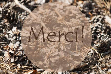 french text: Texture Of Fir Or Pine Cone. Autumn Season Greeting Card. French Text Merci Means Thank You