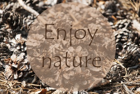 Texture Of Fir Or Pine Cone. Autumn Season Greeting Card. English Quote Enjoy Nature