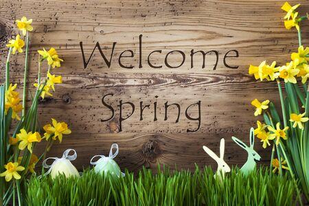Wooden Background With English Text Welcome Spring. Easter Decoration Like Easter Eggs And Easter Bunny. Yellow Spring Flower Narcisssus With Gras. Card For Seasons Greetings
