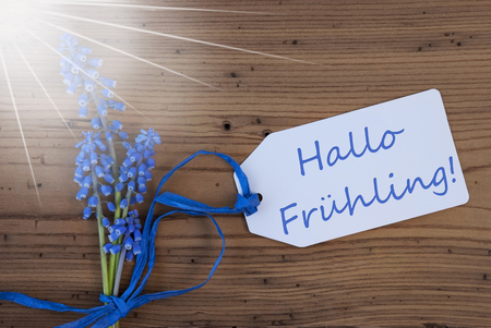 hallo: Label With German Text Hallo Fruehling Means Hello Spring. Sunny Blue Spring Grape Hyacinth With Ribbon. Aged, Rustic Wodden Background. Greeting Card For Spring Season Stock Photo