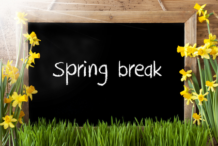 Blackboard With English Text Spring Break. Sunny Spring Flowers Nacissus Or Daffodil With Grass. Rustic Aged Wooden Background.
