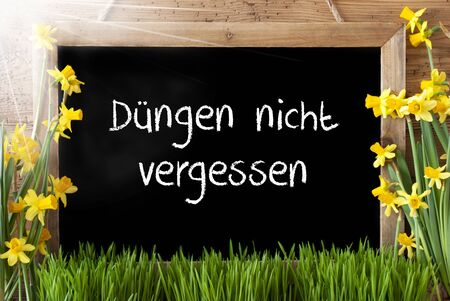 not forget: Sunny Narcissus, Chalkboard, Duengen Nicht Vergessen Means Not Forget Dung