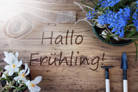 hallo: Sunny Flowers, Hallo Fruheling Means Hello Spring Stock Photo