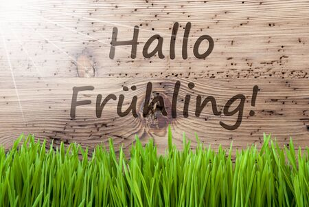 hallo: Bright Sunny Wooden Background, Grass, Hallo Fruehling Means Hello Spring