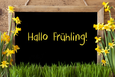 hallo: Flower Narcissus, Chalkboard, Hallo Fruehling Means Hello Spring