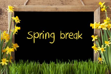 Blackboard With English Text Spring Break. Spring Flowers Nacissus Or Daffodil With Grass. Rustic Aged Wooden Background.