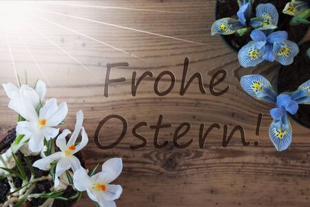 frohe: Wooden Background With German Text Frohe Ostern Means Happy Easter. Sunny Spring Flowers Like Grape Hyacinth And Crocus. Aged Or Vintage Style