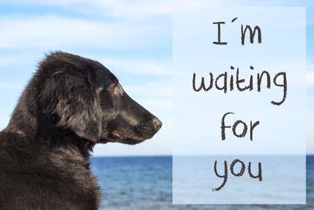 English Text I Am Waiting For You. Flat Coated Retriever Dog Infront Of Ocean. Water In The Background