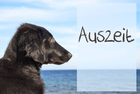 downtime: Dog At Ocean, Auszeit Means Downtime Stock Photo