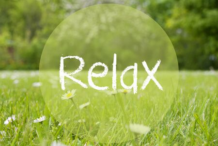 downtime: Gras Meadow, Daisy Flowers, Text Relax Stock Photo
