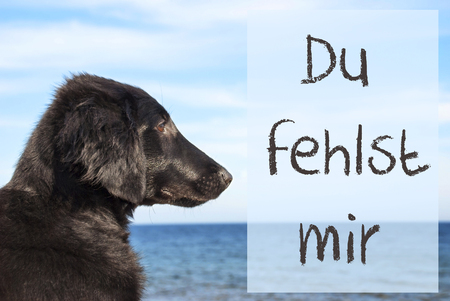 Dog At Ocean, Du Fehlst Mir Means I Miss You Stock Photo