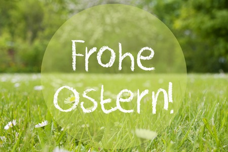 frohe: Gras Meadow, Daisy Flowers, Frohe Ostern Means Happy Easter