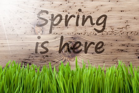 Bright Sunny Wooden Background, Gras, Text Spring Is Here Stock Photo