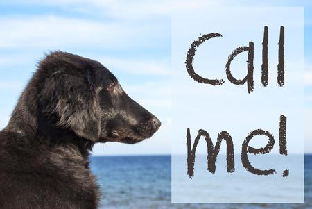 Dog At Ocean, Text Call Me