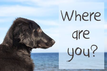 Dog At Ocean, Text Where Are You Stock Photo