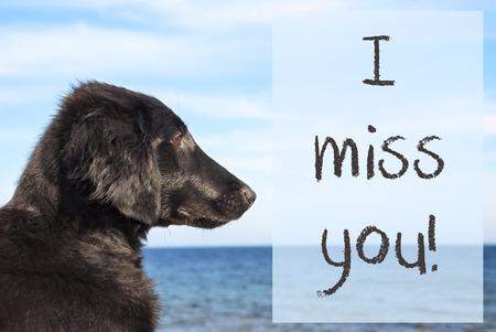 Dog At Ocean, Text I Miss You