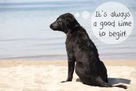 philosophic: Dog At Sandy Beach, Quote Always Good Time To Begin