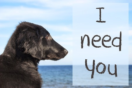 Dog At Ocean, Text I Need You Stock Photo