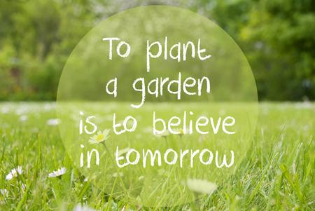 Gras Meadow, Daisy Flowers, Quote Plant Garden Believe In Tomorrow