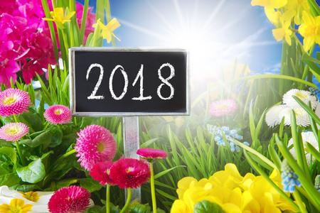 Sunny Spring Flower Meadow, 2018