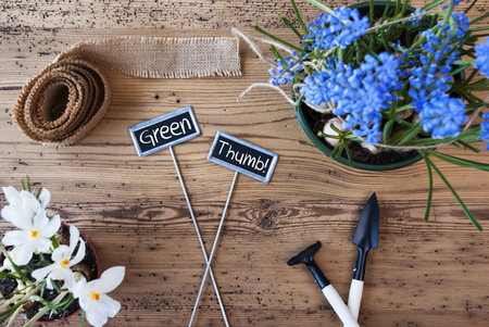 Two Signs With English Text Green Thumb. Spring Flowers Like Grape Hyacinth And Crocus. Gardening Tools Like Rake And Shovel. Hemp Fabric Ribbon. Aged Wooden Background
