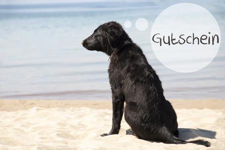 Dog At Sandy Beach, Gutschein Means Voucher