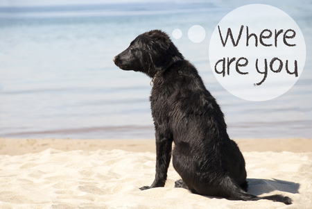 Dog At Sandy Beach, Text Where Are You